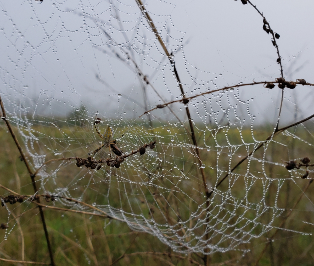 Lonely Lives theSpider