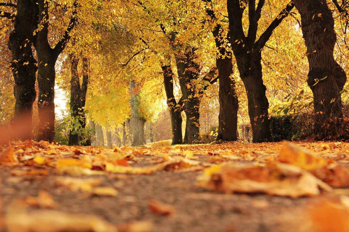 Finding God in the Fall – PartOne